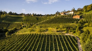 2020 Openings - Il Cipresso Winery
