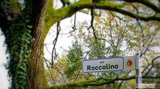 The oak tree and Via Roccolino